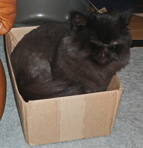 Dougy doses in the luxury of his new box: